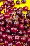 Fresh picked organic cherries Stock Image