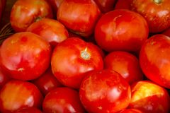 Fresh picked organic red tomatoes Royalty Free Stock Image