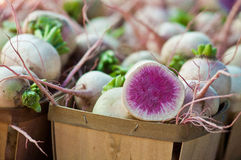 Fresh picked organic watermelon radish Stock Photos
