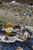 Fresh picked oysters on sea coast with silver glasses. Romantic epicure orgy on the sea coast Fresh picked oysters and organic lemon and mediterranean herbs with Royalty Free Stock Photos
