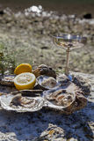Fresh picked oysters on sea coast with silver glasses. Romantic epicure orgy on the sea coast Fresh picked oysters and organic lemon and mediterranean herbs with Stock Photos