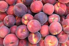 Fresh picked peaches Royalty Free Stock Photos