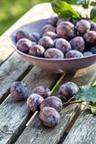 Fresh picked plums in bowl Stock Images