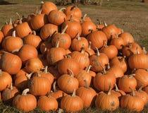 Fresh picked pumpkins Stock Photos