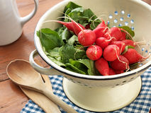 Fresh picked Radishes. Country Kitchen: Fresh picked and washed Radishes Royalty Free Stock Photos