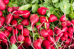 Fresh picked radishes. Freshly picked radishes on display at the farmers market Stock Photo