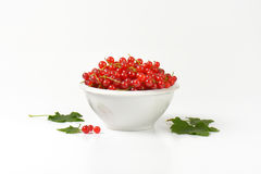 Fresh picked red currants Stock Images