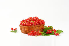 Fresh picked red currants Royalty Free Stock Photos