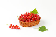 Fresh picked red currants Stock Photo
