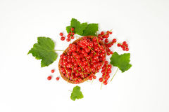 Fresh picked red currants Royalty Free Stock Image