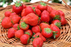 Fresh picked red strawberries royalty free stock photography