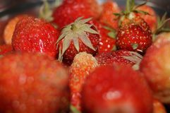 Organic natural red strawberries. Delicious and sweet. Royalty Free Stock Photo