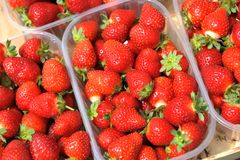 Fresh picked red strawberries in the plastic boxes Royalty Free Stock Photo