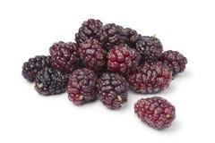 Fresh picked ripe mulberries Stock Photos
