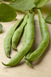 Fresh picked runner beans Stock Images