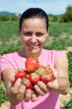 Fresh picked strawberries Royalty Free Stock Photography