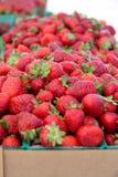 Fresh Picked Strawberries Stock Image