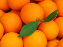 Fresh Picked Valencia Oranges One with Green Leaves Royalty Free Stock Image