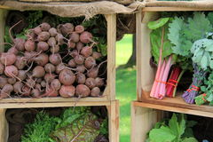 Fresh picked vegetables in wood crates Royalty Free Stock Images