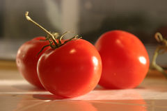 Fresh picked vine ripe red tomatoes. Lycopersicon esculentus sit on a kitchen counter in the morning sun royalty free stock image