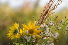 Fresh picked wildflowers in fall. Bouquet of fresh picked wildflowers in autumn Stock Photography
