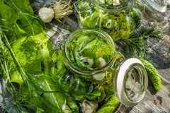 Fresh pickling cucumbers in the countryside Stock Photos