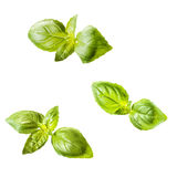 Fresh pieces of basil Stock Photos