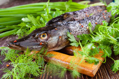 Fresh pike on a cutting board and fresh herbs, fish Stock Photo