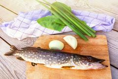 Fresh pike with onions and herbs on the cutting Board. Raw fish prepared for cooking royalty free stock images