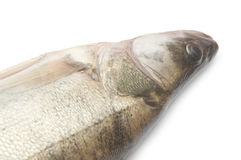 Fresh pike perch. Isolated on a white background Stock Photo