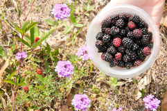 Fresh piked berries Stock Photo
