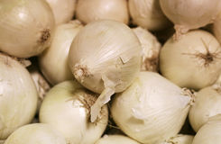 Fresh pile of Onions Royalty Free Stock Images
