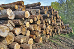 Fresh piled tree Royalty Free Stock Photography