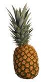 Fresh Pinapple Stock Photo