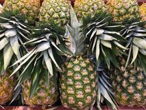 Fresh Pinapple Stock Photo