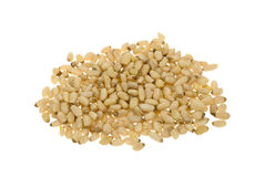 Fresh pine nuts Stock Photography