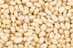 Fresh pine nuts Stock Photo