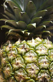 Fresh pineapple Stock Images
