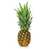 Fresh pineapple Stock Photography
