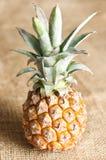 Fresh pineapple on burlap Royalty Free Stock Image