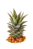 Fresh pineapple crown Royalty Free Stock Image