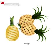 Fresh Pineapple, A Famous Fruit in Tonga Stock Photography