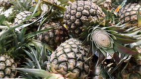 Fresh Pineapple from the field Royalty Free Stock Image