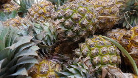 Fresh Pineapple from the field Royalty Free Stock Photos