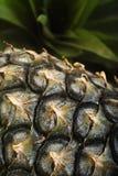 Ripe pineapples. Fresh pineapple fruit background , ripe pineapples Royalty Free Stock Photo