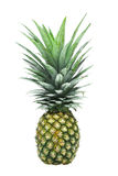 Fresh pineapple Stock Photography