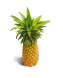 Fresh pineapple Stock Images