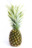 Fresh pineapple isolated Stock Image
