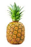 Fresh Pineapple isolated Stock Images