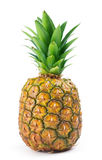 Fresh Pineapple isolated Royalty Free Stock Photo